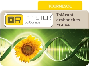 Tournesol Or Master